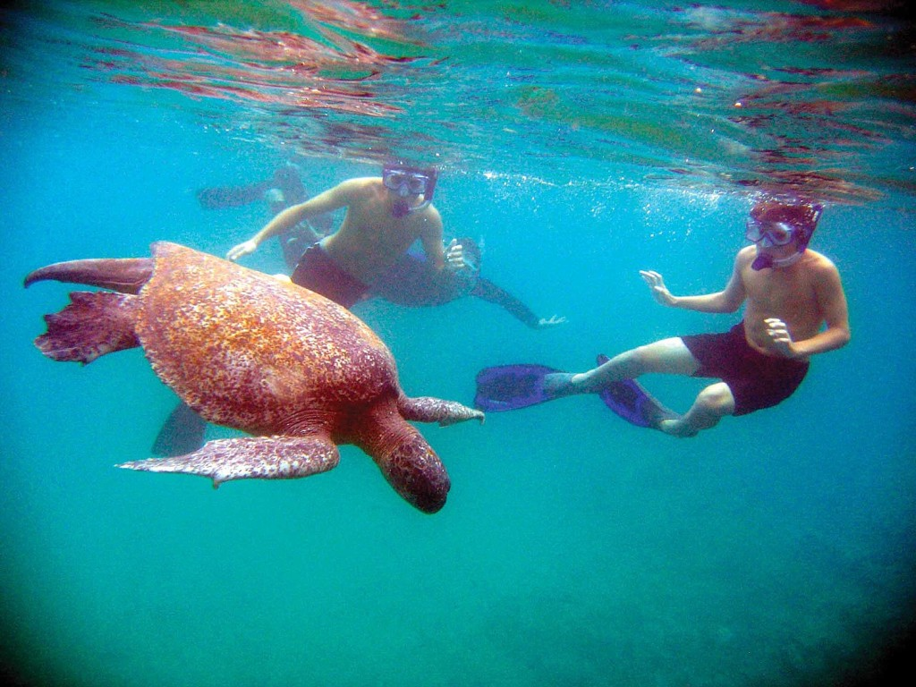 Snorkeling with sea turtles is one of the highlights of Lindblad-National Geographic's Galapagos trip. Late summer departures also include special opportunities to participate in conservation, as well as take advantage of free airfare from Miami.